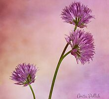 Chive Blossoms by Anita Pollak