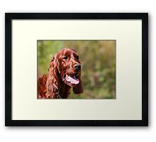 Irish Setter I Framed Print