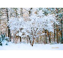 Siebold Viburnum in the Snow Photographic Print