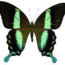Butterfly by Sunil Bhardwaj