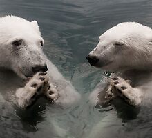 """Bear Prayer"" - polar bears look like they are praying by John Hartung"