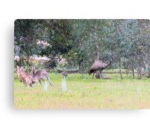 Emus & Kangaroos Metal Print