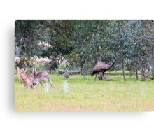 Emus & Kangaroos Canvas Print