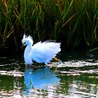 Egret 5 by dandefensor