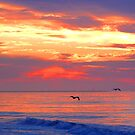 Cape May Dawn by dandefensor
