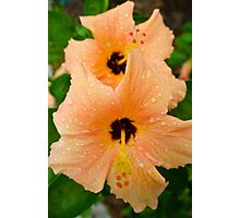 peach hibiscus_2 Photographic Print