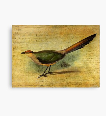 The Cuckoo's Note Canvas Print