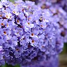 Lilac Flowers by LydiaWoods