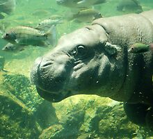 Happy Hippo - Singapore Zoo by Loachlover