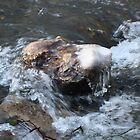 Frozen Loggerheads again by Andy Green