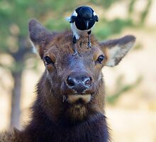 He Better Not Poop On My Head by John  De Bord Photography