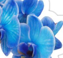 Variant Blue Sticker