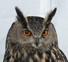 Eagle Owl by LydiaWoods