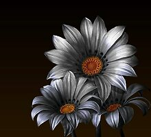 Peruvian Daisy Selective by Snopaw