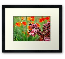 Bumble Bees2 Framed Print