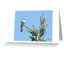 Jay Me 3 Greeting Card