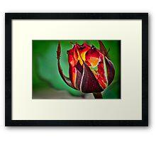 Fire Bloom Framed Print