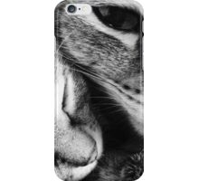 domestic cats iPhone Case/Skin