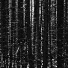 Trees For The Wood ! - Scotland by synergymono