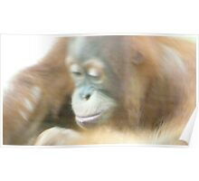 Contemplative Orangutan - Toronto Zoo Poster