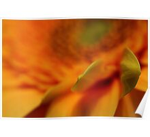 Gerbera  abstract Poster