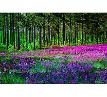 Meadow In Pink And Violet Photographic Print