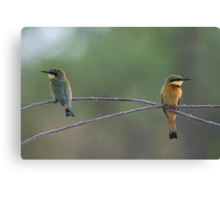 Little Bee-eaters Canvas Print