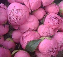 pretty in pink by Lynn  Jovick