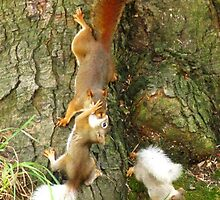 The New Adventures Of Cannibal Squirrel by artwhiz47