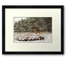 Wounded Buck  Framed Print