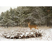 Wounded Buck  Photographic Print