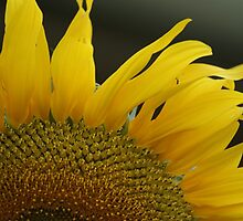 Sunny Bits by Carol Field