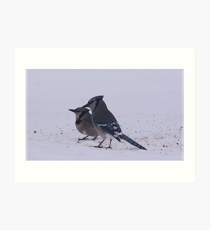 Two Blue Jays Art Print