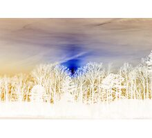 White Splendor Photographic Print