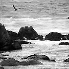swim in the breeze off the rocky shore by ShadowDancer