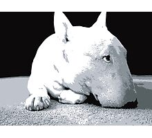 English Bull Terrier Dog, Black and White Pop Art Print Photographic Print