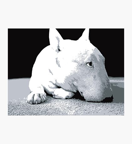 English Bull Terrier Dog, Black and White Pop Art Print Photographic Print