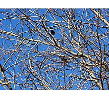 Tree in Winter against Blue Sky Photographic Print