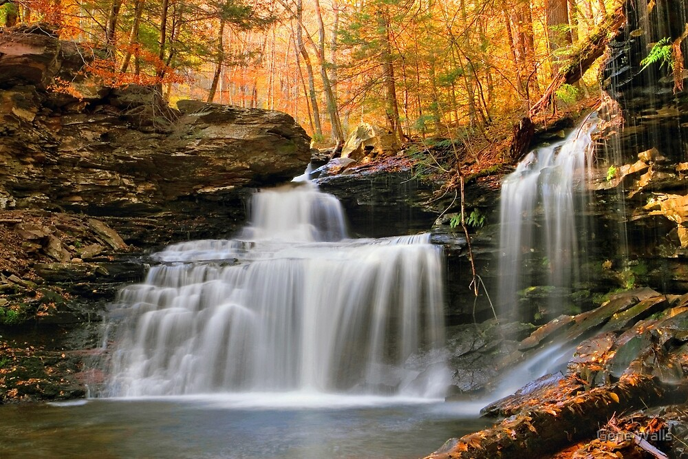 R. B. Ricketts Falls Under Fall's Golden Halo by Gene Walls