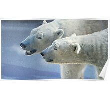brothers on ice polar bears Poster