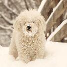 My Woolly Bear by lorilee