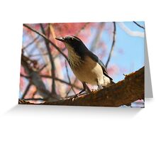 Chicken (as performed by a scrub jay) Greeting Card