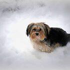 Bayle (Fizzle) Roming In The Snow by Linda Miller Gesualdo