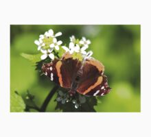Red Admiral Butterfly One Piece - Short Sleeve