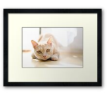 The pouncing kitty Framed Print
