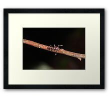 World's Most Painful Sting Framed Print