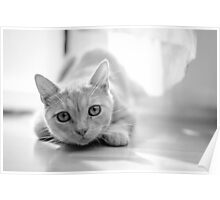 The pouncing kitty - BW Poster