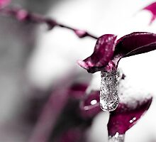 FROZEN TEARS by Ronny Falkenstein