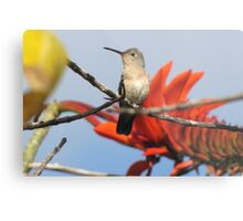 Buffy Hummingbird 1 Metal Print