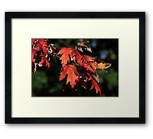 Colorful Fall Leaves Framed Print